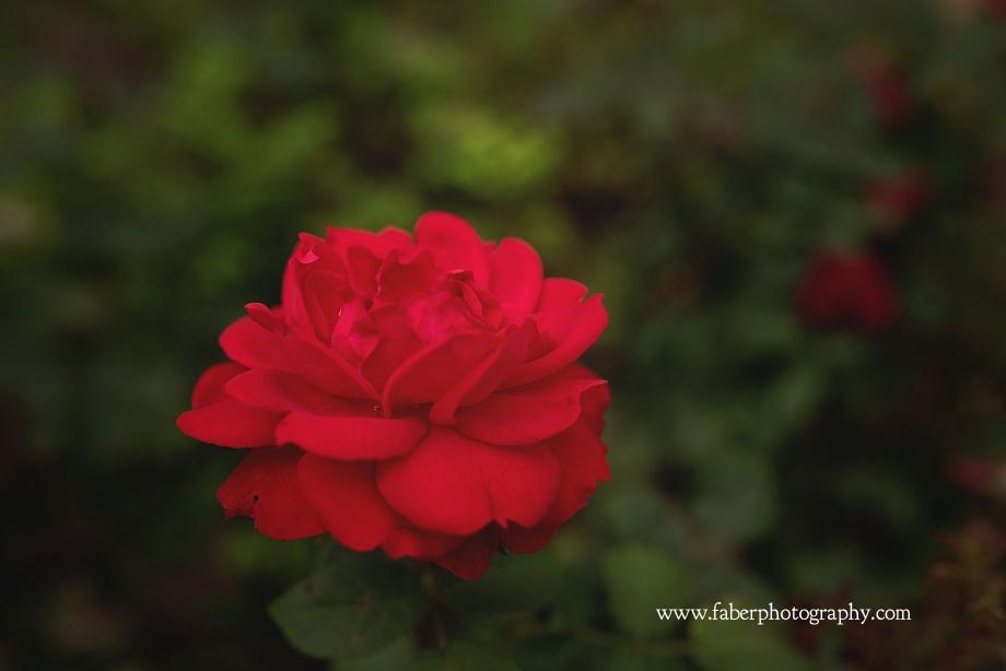Boerner Botanical Rose Garden Wedding